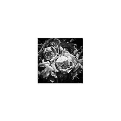 """ORNELLA  FRANCOU, """"Rose"""" fotografia, cm. 100x100"""