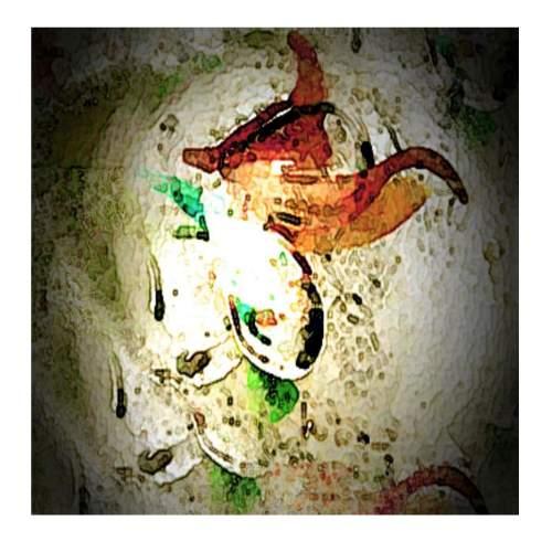 """Thon """" Phoenix"""", tecnica mista su tela , cm.100x100, firmato datato 2004"""